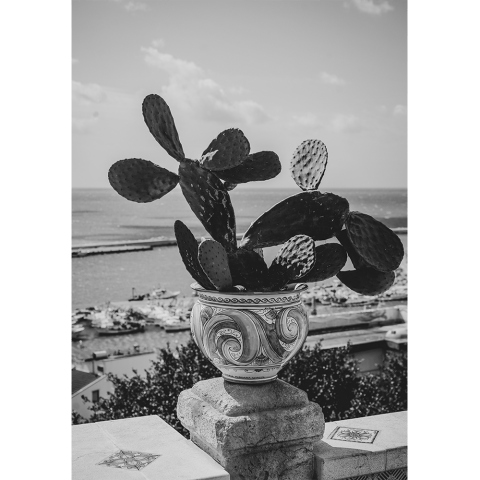 Sicilian Plant Poster